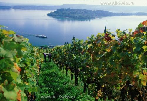 Виноградники на Бильском озере
