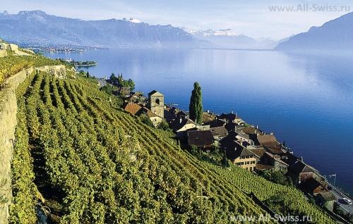 Виноградники Лаво на берегу озера
